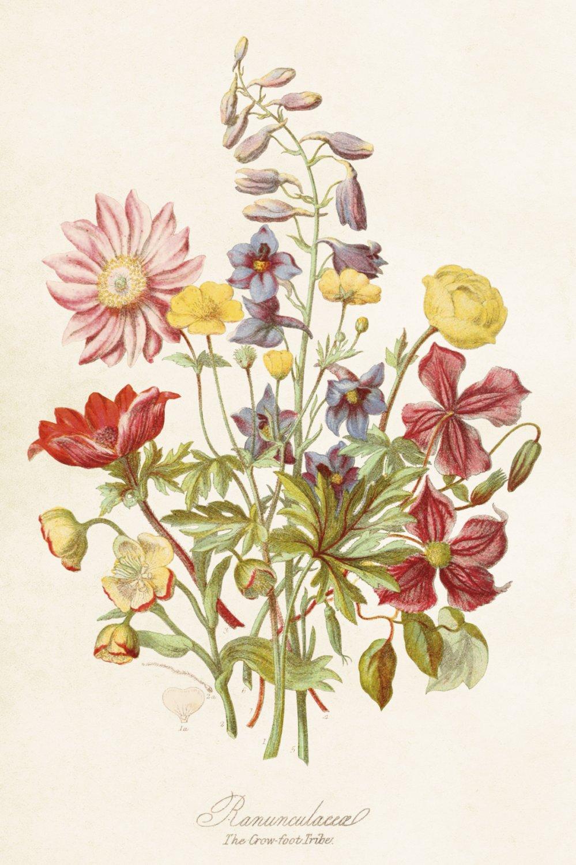 Kaart wilde bloemen
