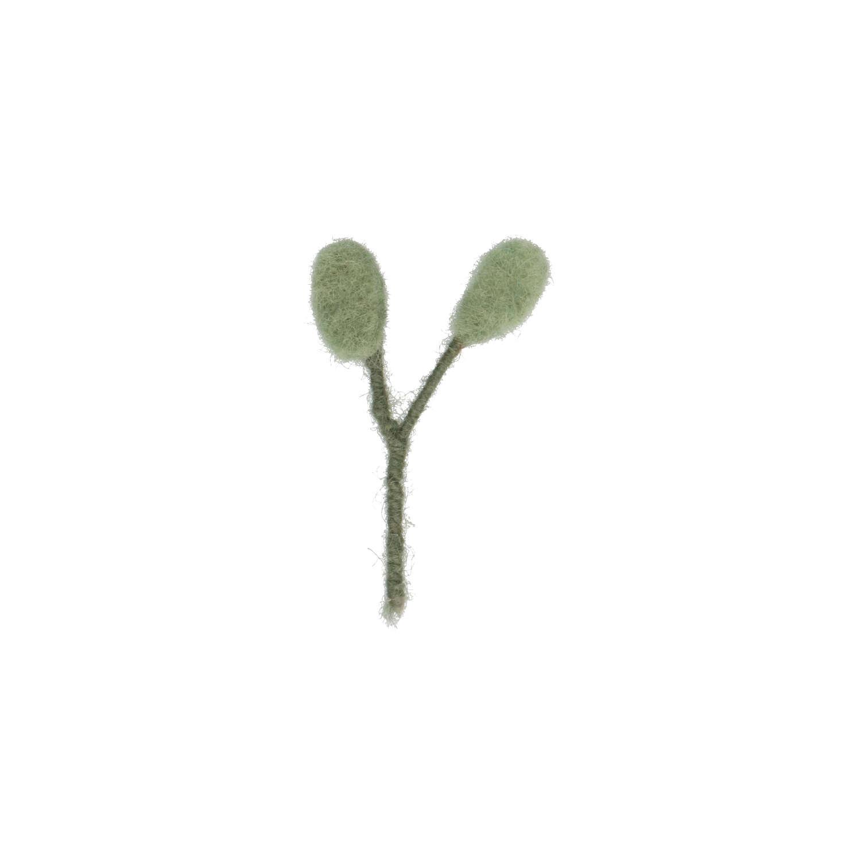 Eucalyptus vilt klein