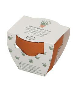 Aloe vera, graines et pot
