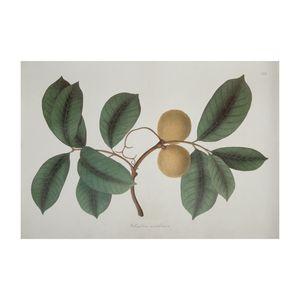 Poster, branche de citronnier, 50 x 70 cm