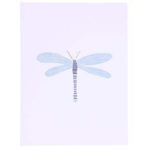 Poster, libellule, 18 x 24 cm