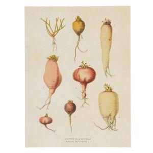 Poster, tubercules, 18 x 24 cm