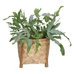 Pot op pootjes, bamboe, naturel, Ø 25 x 22 cm